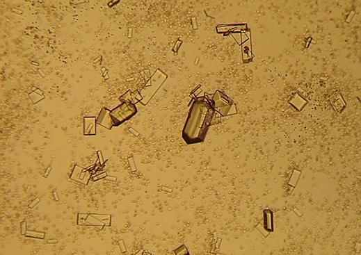 krystaller i urinen hos katte